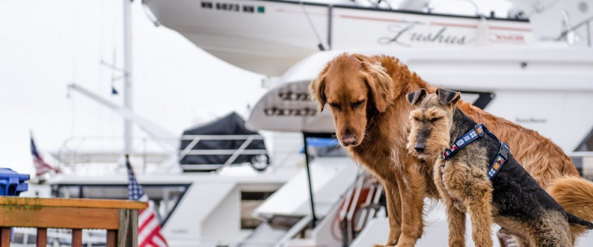 Expert Travel Tips for You and Your Pet