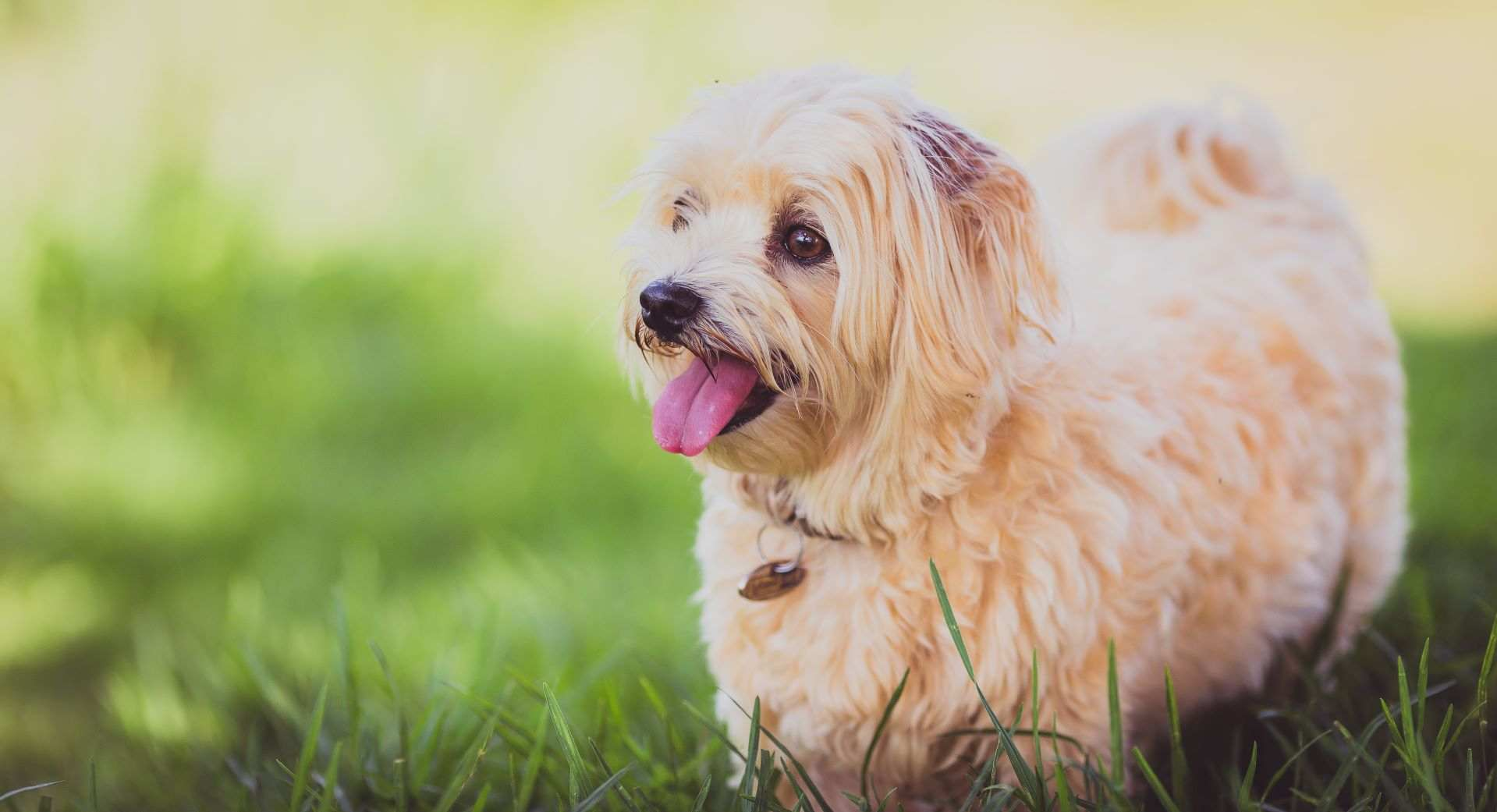 dental treatments for dogs