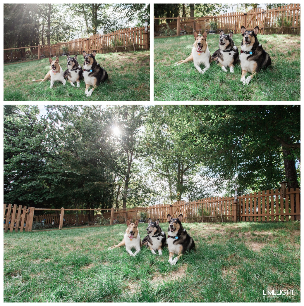 The Medel Crew of Collies Puppy Portraits