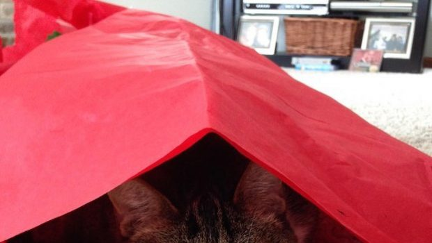 Djur hittar 5 kreativa användningsområden för överblivet julklappspapper