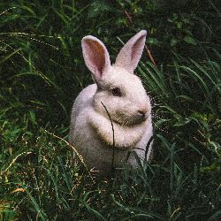 Profile Picture of White Rabbit in Alice's Adventures In Wonderland