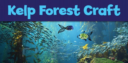 Animals_KelpForest