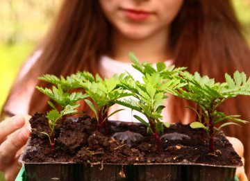 Green thumb the ph of soil science experiment