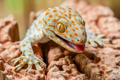 Explore the Lizards of Asia on World Lizard Day