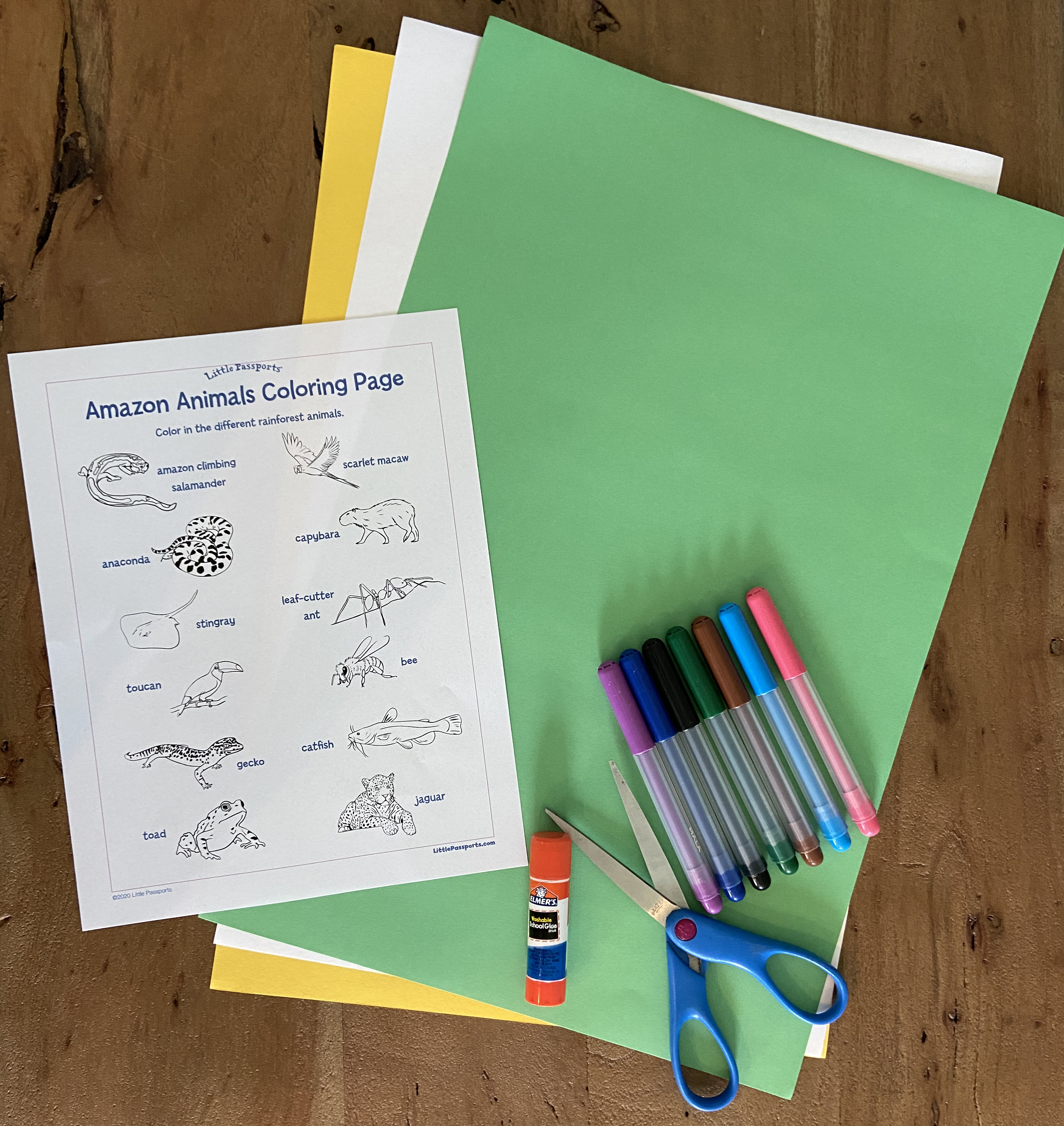 Amazon animal classification activity for kids