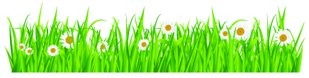 Spring Daisies in Grass