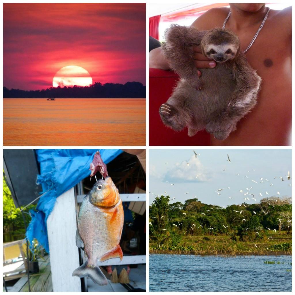Little Passports Blog Explore Brazil Nature Collage
