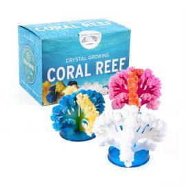 Coral Reef Kit Image