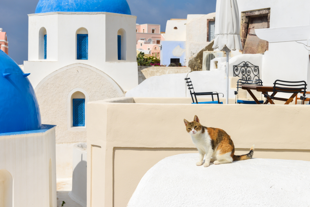 brown and white cat sitting on a Santorini building - Little Passports photo gallery