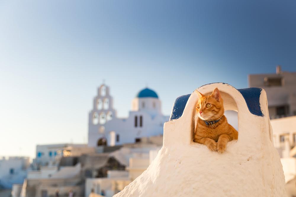 orange tabby cat resting in a nook in Santorini - Little Passports photo gallery