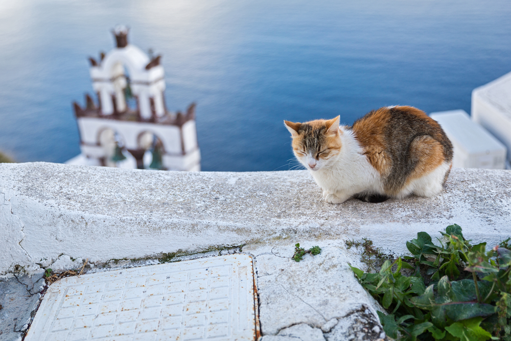orange, brown, and white cat napping on a ledge in Santorini - Little Passports photo gallery