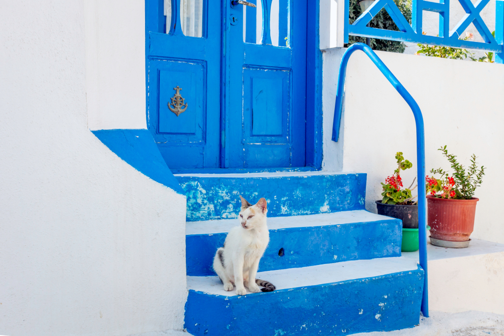 white cat sitting on bright blue steps of a Santorini home - Little Passports photo gallery