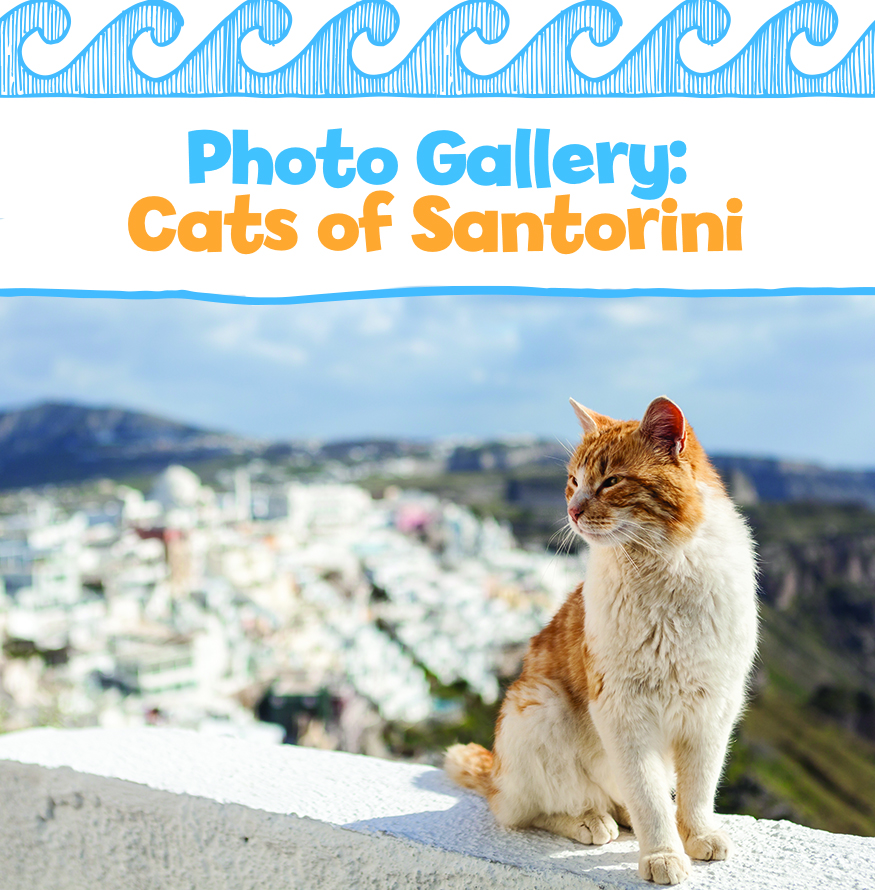 Photo Gallery: Cats of Santorini