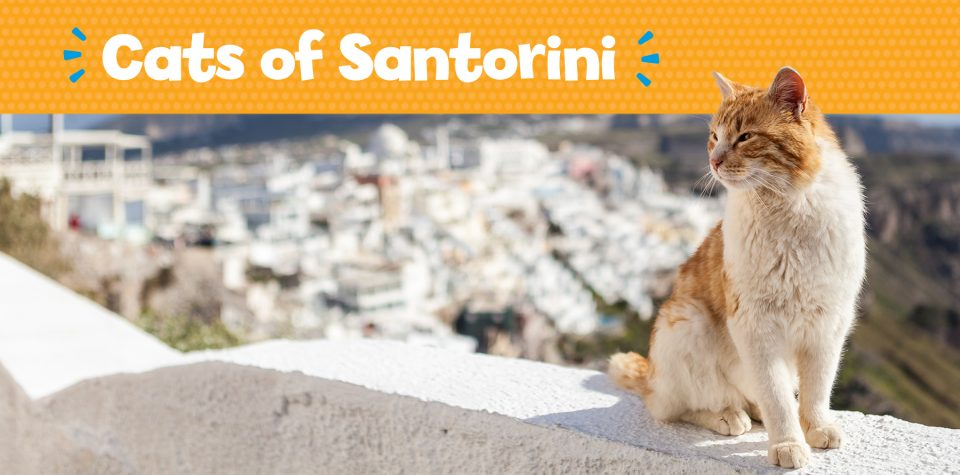 View Little Passports' gallery of the cats of Santorini