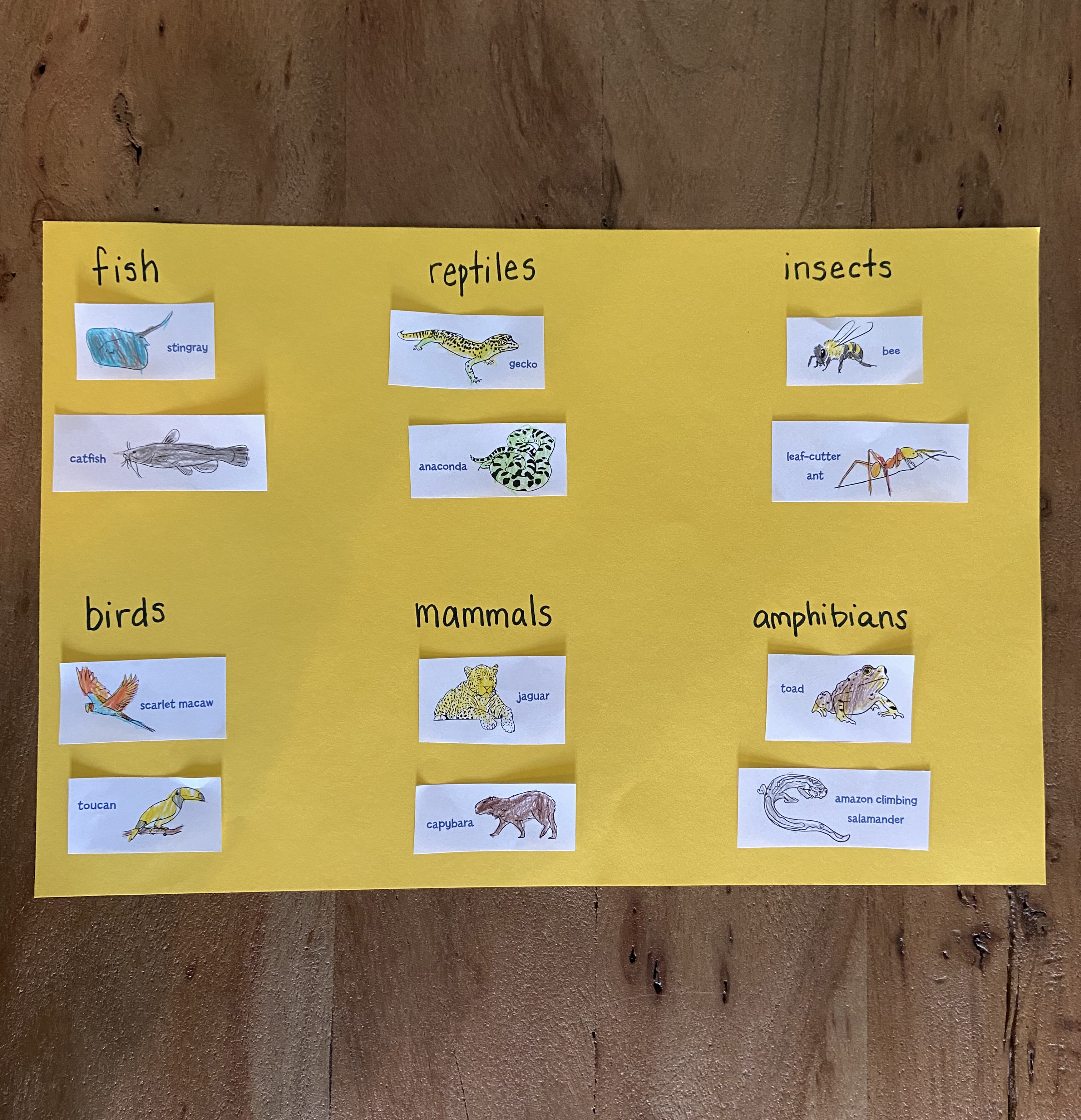 Sort and label Amazon animals - activity for kids