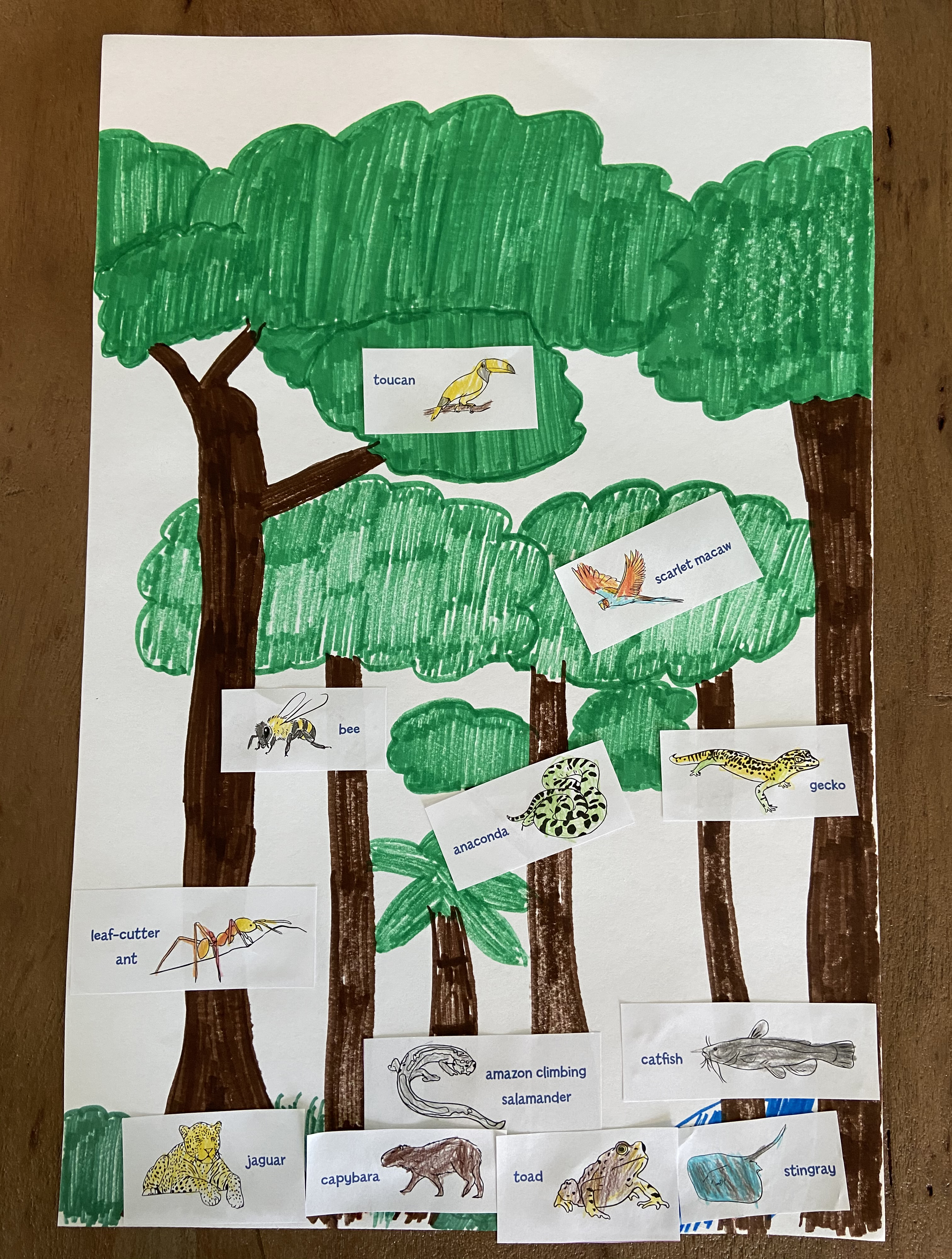 Amazon animal classification activity for kids completed