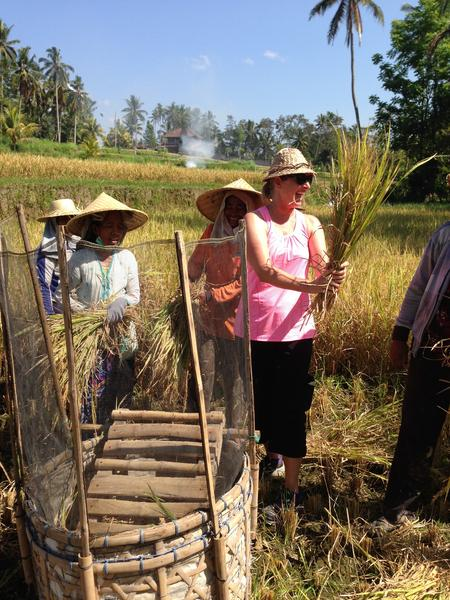 Robin Goes To bali rice fields harvesting