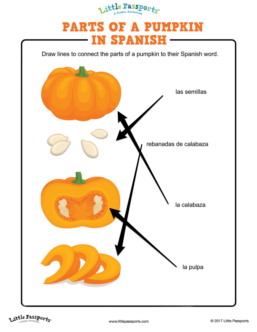 Answer key for parts of a pumpkin