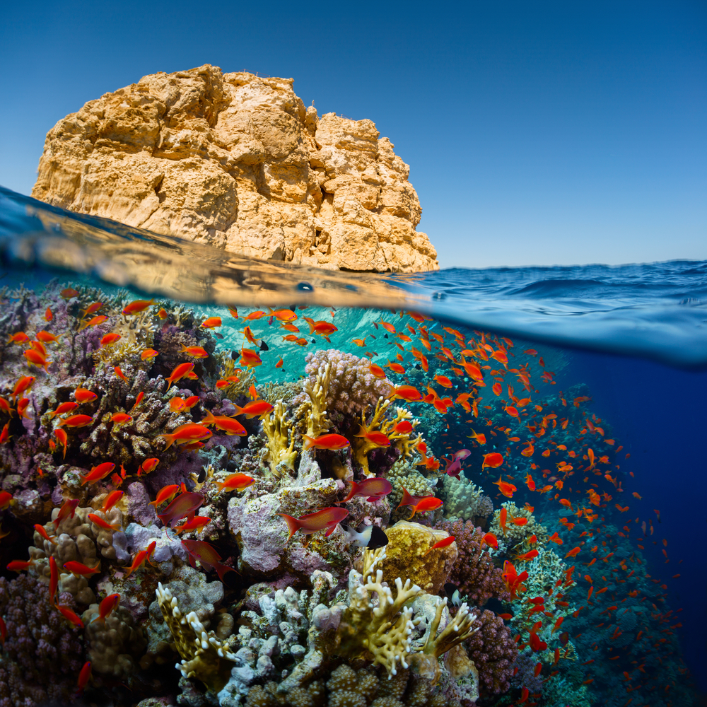 Colorful fish and coral in the waters of Ras Muhammad National Park in Egypt - Little Passports photo gallery