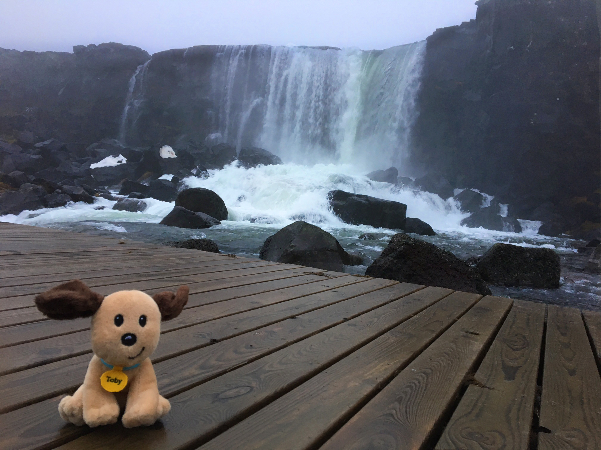 Toby at Pingvellir National Park