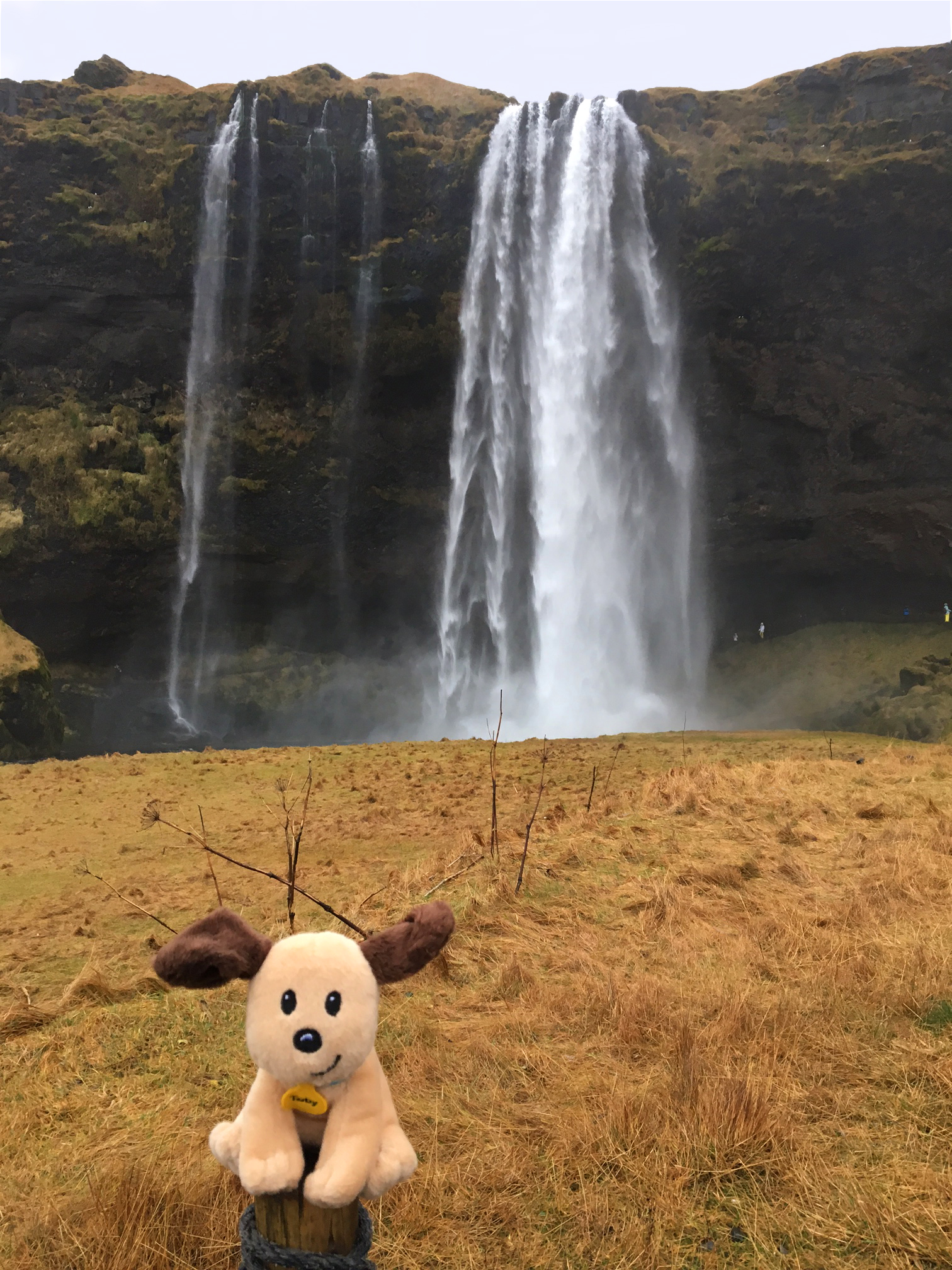 toby in front of seljalandsfoss waterfall