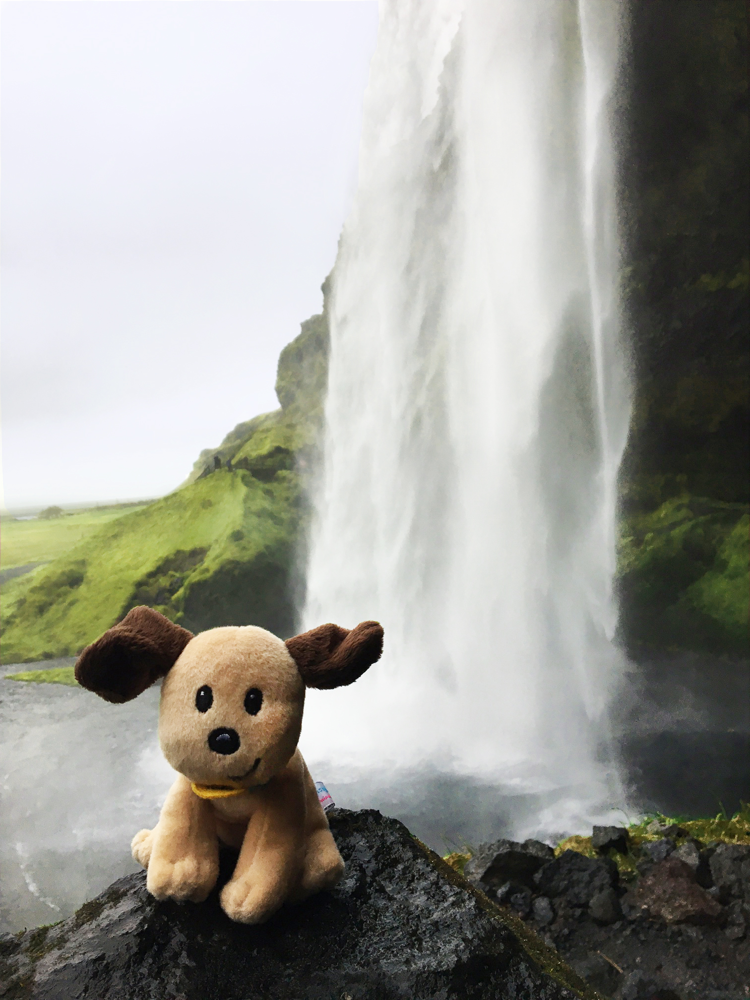 toby behind seljalandsfoss waterfall
