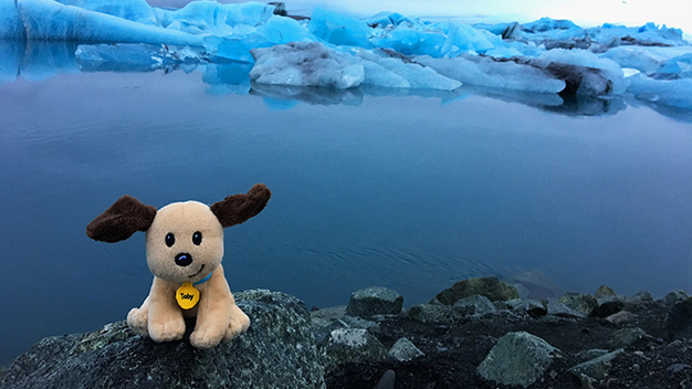 Toby in Iceland