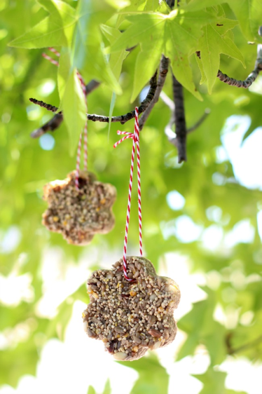 hanging birdfeeder in a tree