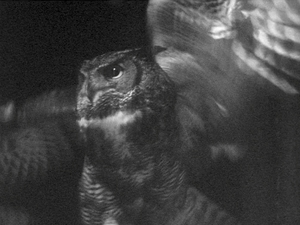 The Owl in the Snow (short B&W 16mm film)