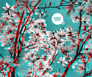 3D Anaglyph Photography