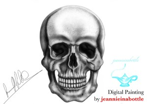 Digital Speed Painting - Human Skull, Anatomical Series by jeannieinabottle
