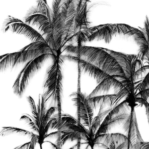 Palms Pencil Drawing