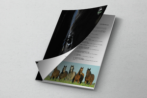Haras Chenaut catalogue design