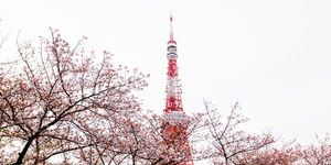 11 Neighborhoods To Check Out In Tokyo, For The First-Time Traveler – Elite Daily
