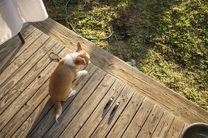 Puppy Goes Outside