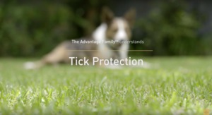 How to Spot & Remove Ticks on Dogs