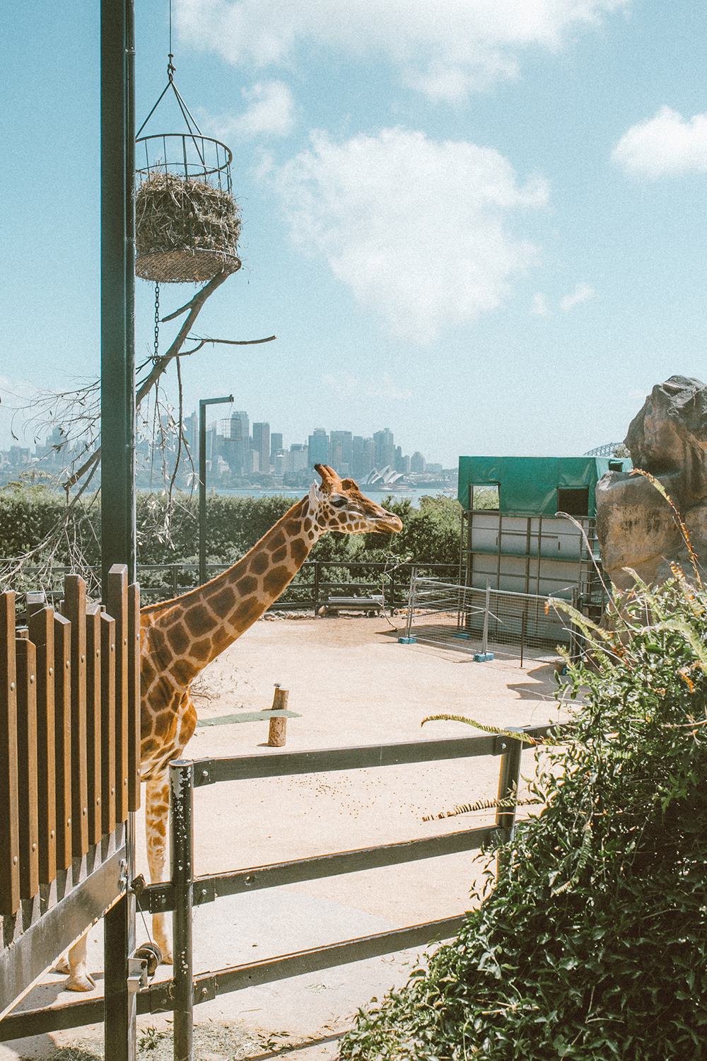 livvyland-blog-olivia-watson-austin-texas-fashion-travel-lifestyle-blogger-sydney-melbourne-australia-taronga-zoo-giraffes