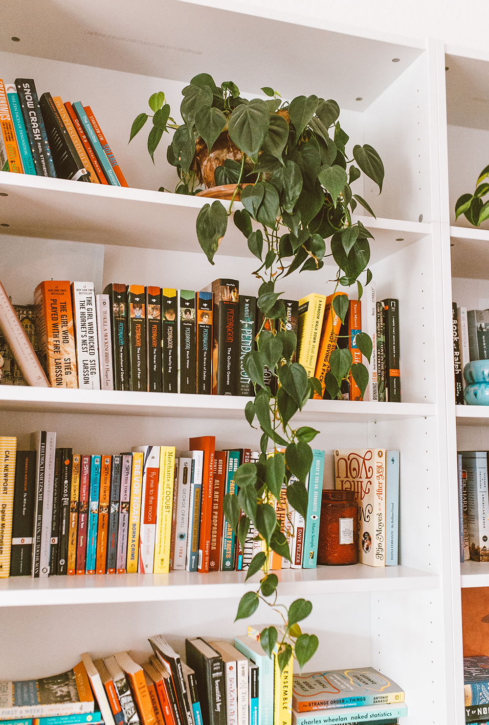 livvyland-blog-olivia-watson-austin-texas-lifestyle-blogger-home-decor-inside-plant-care-how-to-bookshelf-2