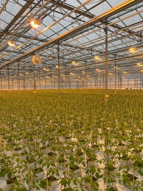 Plant Raisers Limited - 0