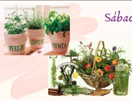 Taller Plantas Medicinales