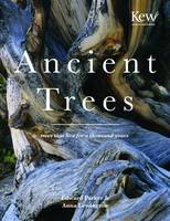 Ancient Trees Trees That Live for a Thousand Years