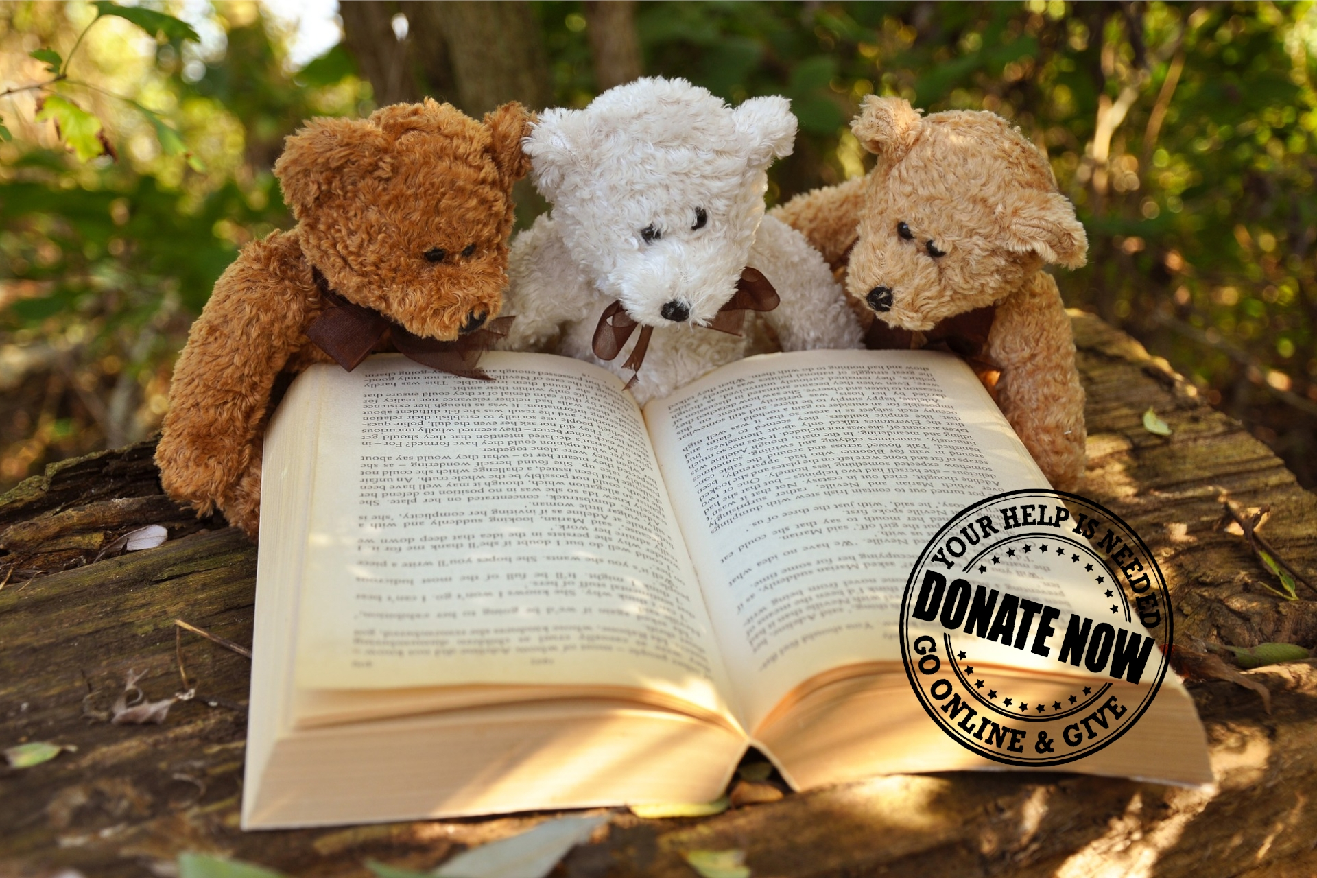 Win an Author Visit While Fundraising for the National Literacy Trust