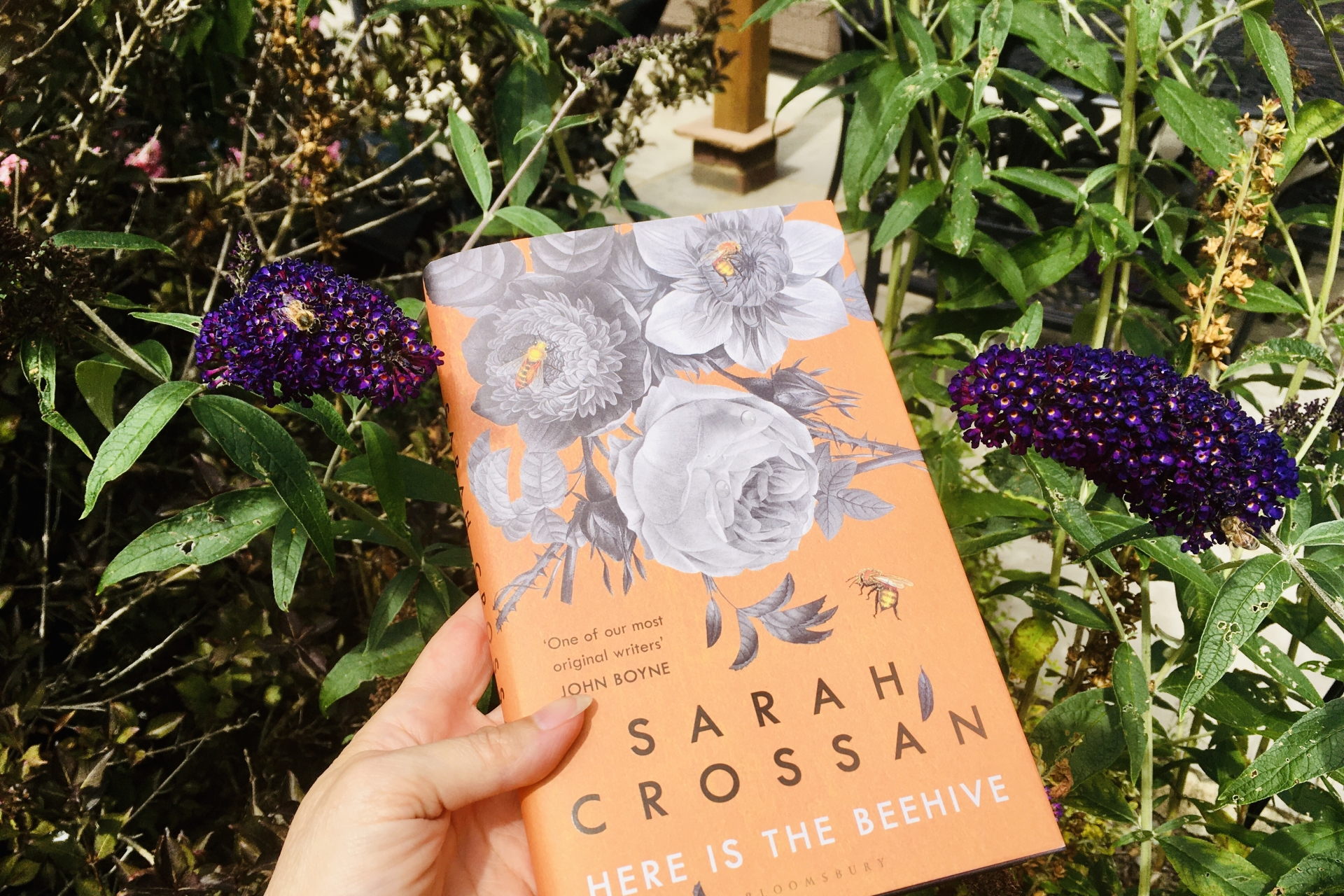 September 2020 Book Club Recommendation: Here is the Beehive by Sarah Crossan