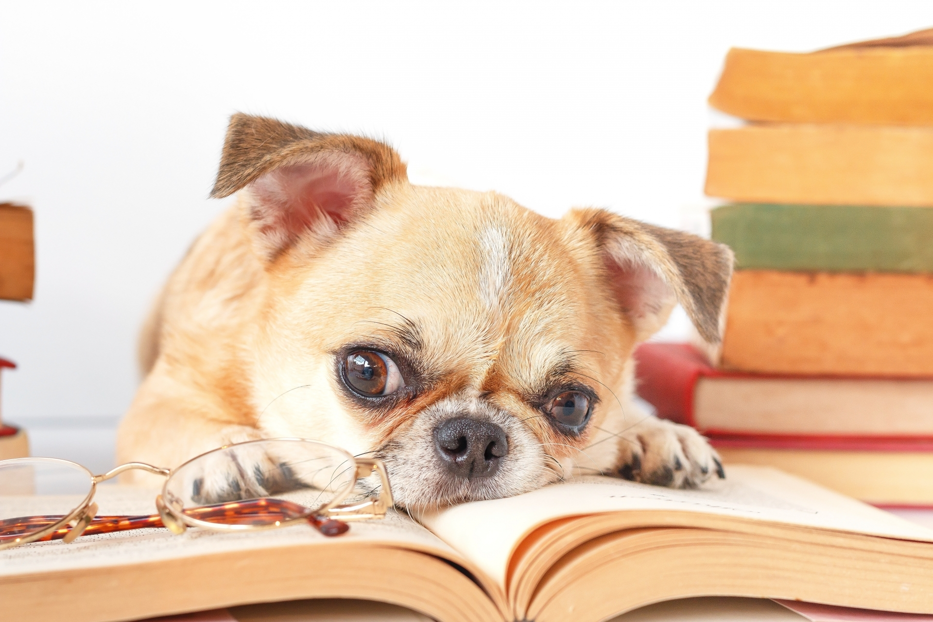 Celebrate International Dog Day with this collection of doggy books about our favourite furry friends