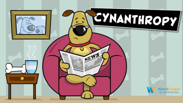 cynanthropy dog reading newspaper in chair