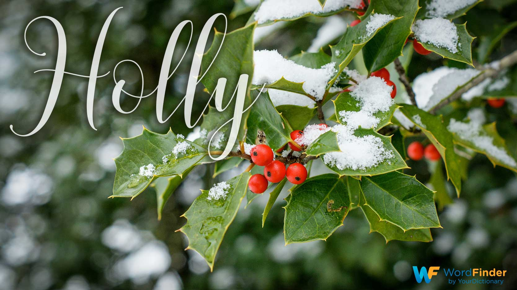 christmas word meaning holly