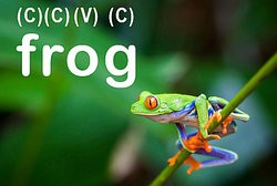 A Frog As CCVC Word Lists