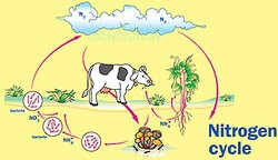 Natural Ecosystem Examples in Biology