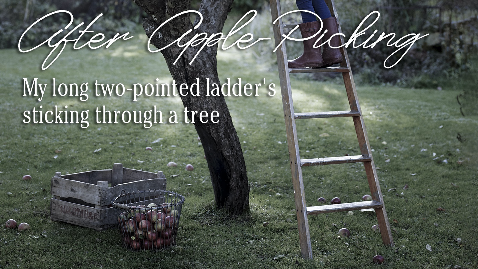 poem Robert Frost After Apple-Picking