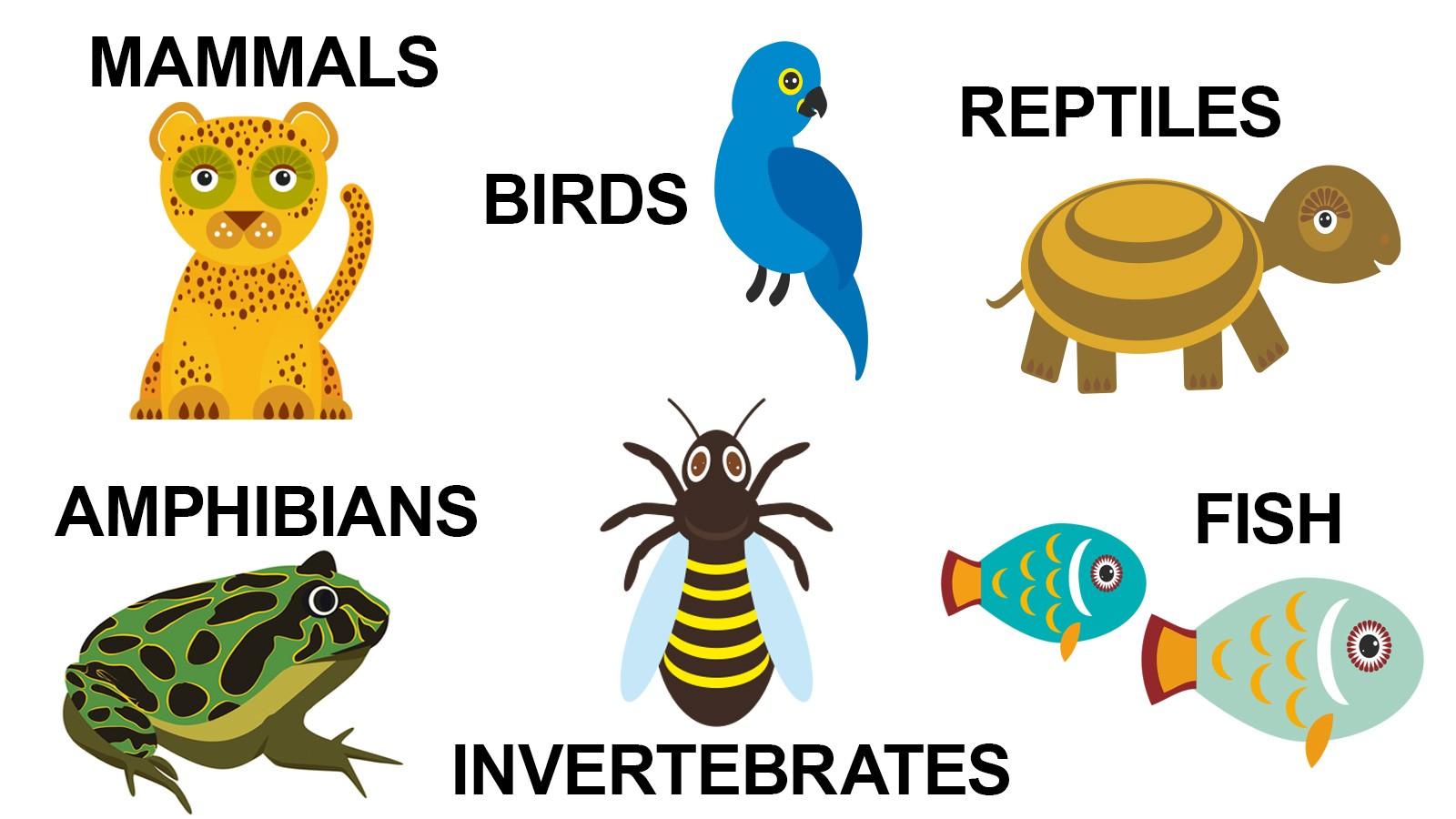 types of animals in animal kingdom